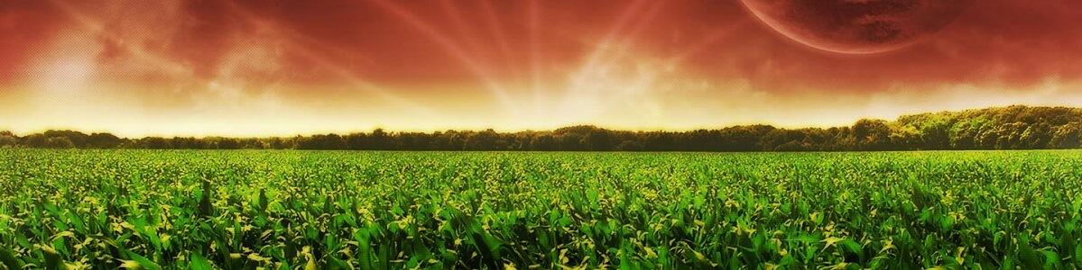 Технологія вирощування кукурудзи
