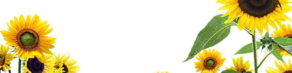 Соняшник під Євро-лайтнінг